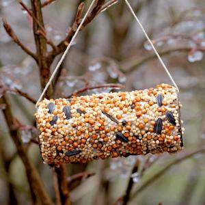 Bird Feeder 1 300x300 - Fun, Environmentally Friendly Gardening Activities