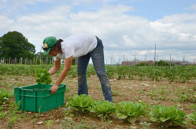 Green Gardening, Fresh Food, Healthy Patients