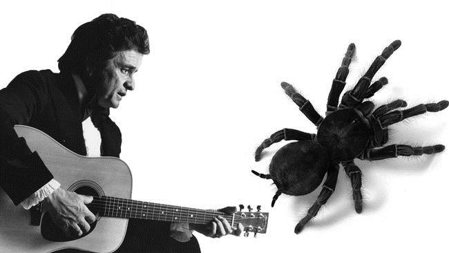 """A new spider species is named after the """"Man in Black"""", Johnny Cash"""