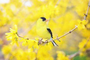 spring bird 2295435 1280 300x200 - Welcome Spring!