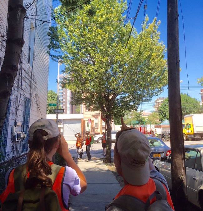 Healthy Trees, Healthy Cities